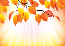 Autumn branch with yellow leaves background Stock Photos