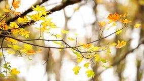 Autumn Branch stock video