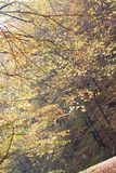 Autumn branches Stock Photo