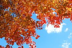 Autumn branches Royalty Free Stock Images