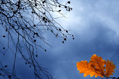 Autumn branches against sky Royalty Free Stock Photo