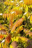 Autumn branches Royalty Free Stock Image