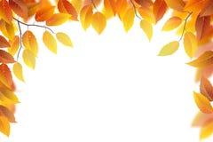 Autumn branches frame Stock Photos