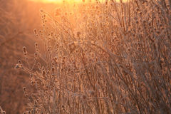 Autumn branches and grass at sunset Royalty Free Stock Photography