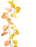 Autumn branches and leaves border Stock Image