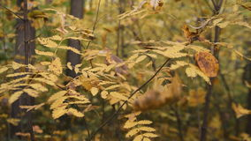 Autumn branches with leaves moving in the wind slightly stock footage