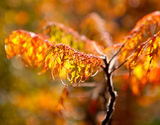 Autumn branches in the sunlight Royalty Free Stock Photography
