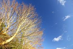 Autumn. Branches of tree against the blue sky Royalty Free Stock Image