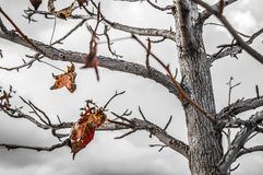 AUTUMN BRANCHES royalty free stock photography