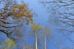 Autumn branches of trees against the sky Royalty Free Stock Photography