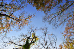 Autumn branches of trees against the sky Stock Photography