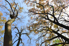 Autumn branches of trees against the sky Stock Photos