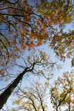 Autumn branches of trees against the sky Stock Images