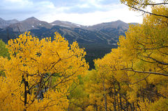 Autumn in Breckenridge Mountains Royalty Free Stock Photo