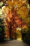 Autumn bridge. Bridge in park with autumn trees in the background Stock Photo