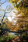 Autumn Bridge en Beek bij Botanische Tuinen Royalty-vrije Stock Afbeelding