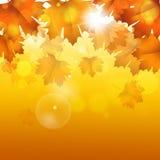 Autumn Bright Background dorato Fotografia Stock Libera da Diritti
