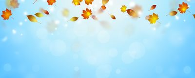 Autumn falling leaves. Autumn bright banner with falling yellow leaves stock photos