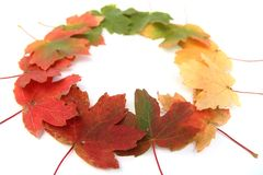 Autumn  bright-colored leaves Royalty Free Stock Photo