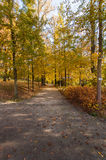 Autumn and bright colors. Autumn fairytale forest tree Royalty Free Stock Photo