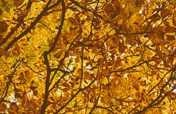 Autumn bright leaves background Stock Image