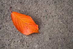 Autumn bright leaves on the concrete stock photo