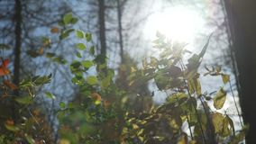 Autumn Bright Sunbeam Behind Leaves metrajes
