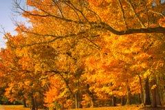 Autumn Brilliance Immagini Stock