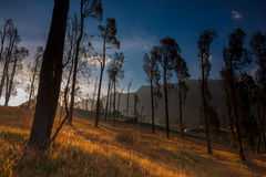 Autumn in Bromo Tengger Semeru National Park. Stock Photo