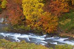 Autumn brook Stock Image