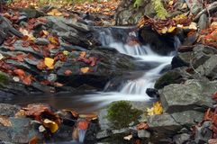 Autumn brook Royalty Free Stock Image