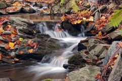 Autumn brook. Shot of a autumn brook royalty free stock image