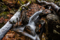 Autumn Brook Fotografering för Bildbyråer