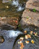 Autumn Brook Stockbilder