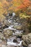 Autumn Brook Lizenzfreies Stockbild