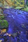 Autumn brook Stock Photos