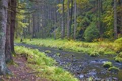 Autumn brook Stock Photo