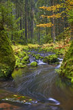 Autumn brook Royalty Free Stock Images