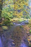 Autumn brook Stock Images