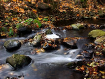 Autumn brook. With fallen leaves Royalty Free Stock Photo