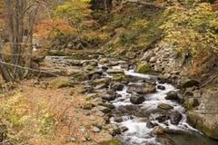 Autumn brook Stock Photography