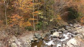 Autumn brook. Brook flowing among many stones beside trees in autumn stock video