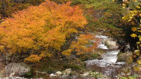 Autumn brook stock footage