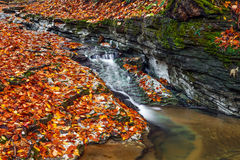 Autumn Brook Stock Images