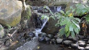 Autumn Brook on Sunny Day. stock video