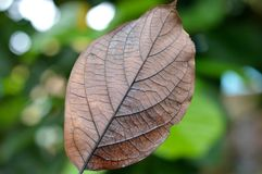 Autumn, Brown, Close-up Royalty Free Stock Image
