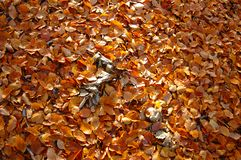Autumn forest leaves stock image