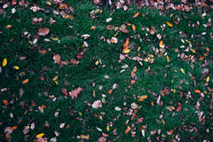 Autumn brushwood. Leaves on a undergrowth autumn colorful and varied royalty free stock image