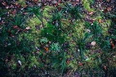 Autumn brushwood. Undergrowth autumn colorful and varied royalty free stock image