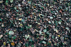 Autumn brushwood. Undergrowth autumn colorful and varied stock images